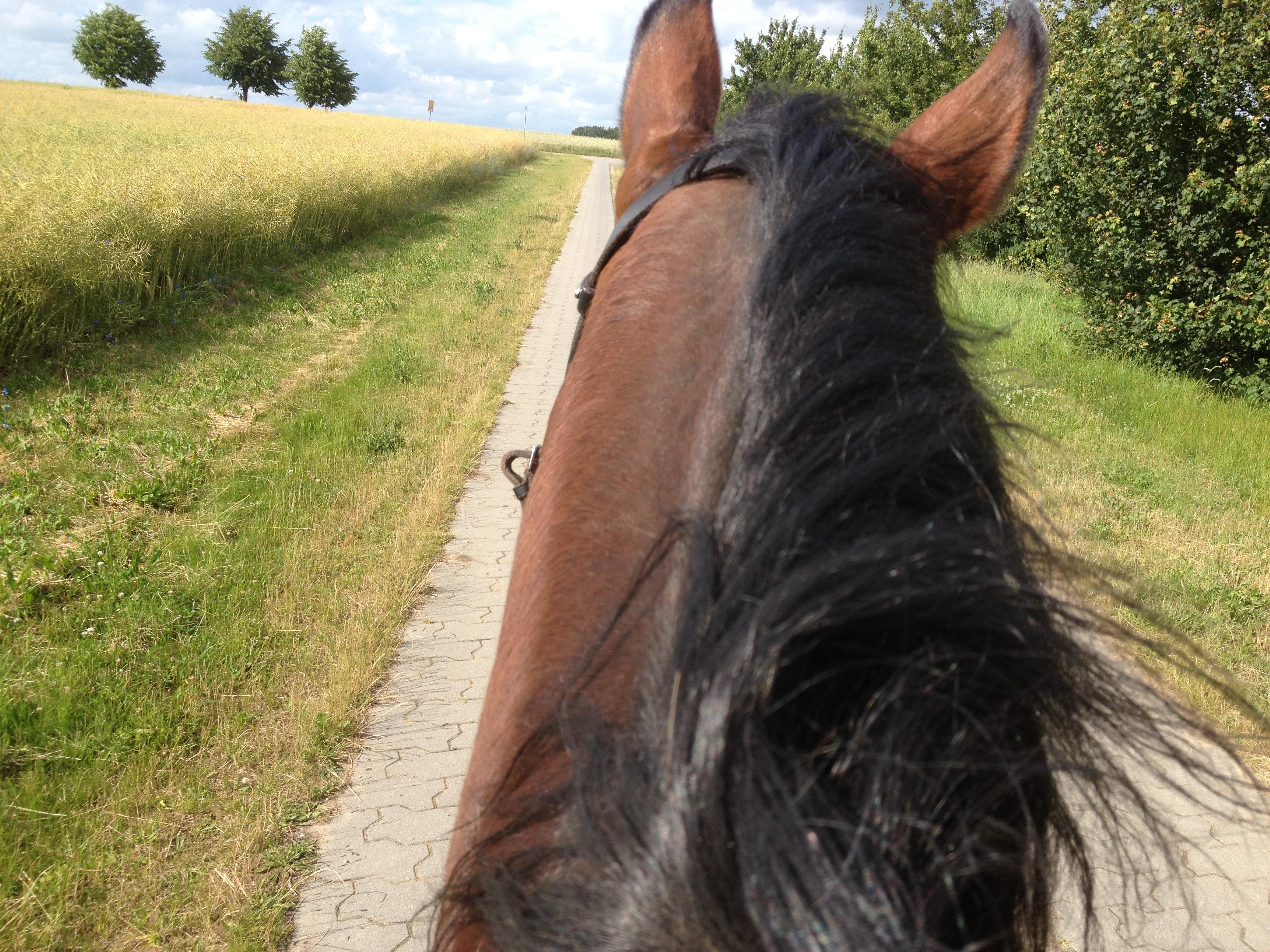 IMG_0431 Reiten Sie noch immer ein totes Pferd?
