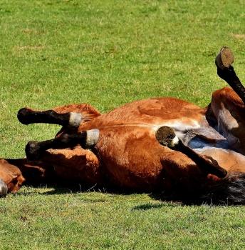 Reiten Sie noch immer ein totes Pferd?